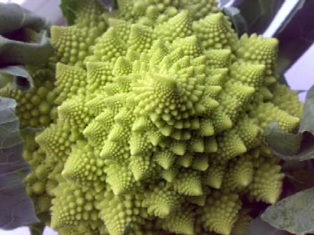 Romanesco Cauliflower2