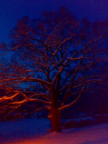 Tree in the right light!